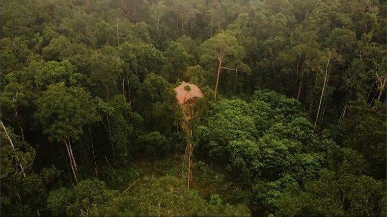 Yamyamlara Yem Olmamak İçin 40 Metrelik Ağaçlarda Yaşayan Tuhaf Kabilenin Hikayesi [Video]