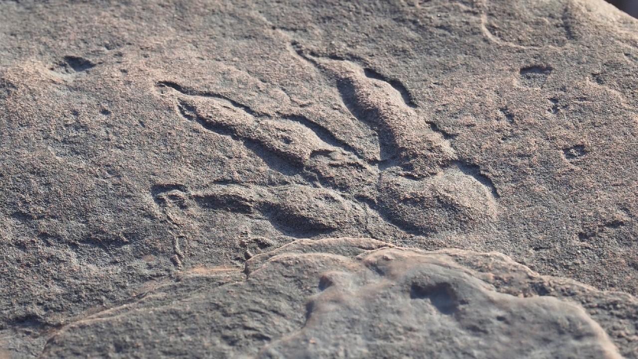 dinozor ayak izi