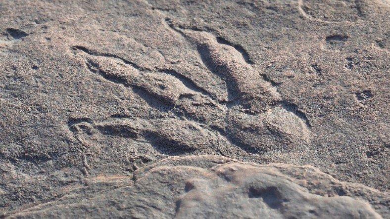 4 Yaşındaki Kız Çocuğu, İngiltere'de 220 Milyon Yıllık Dinozor Ayak İzi Buldu