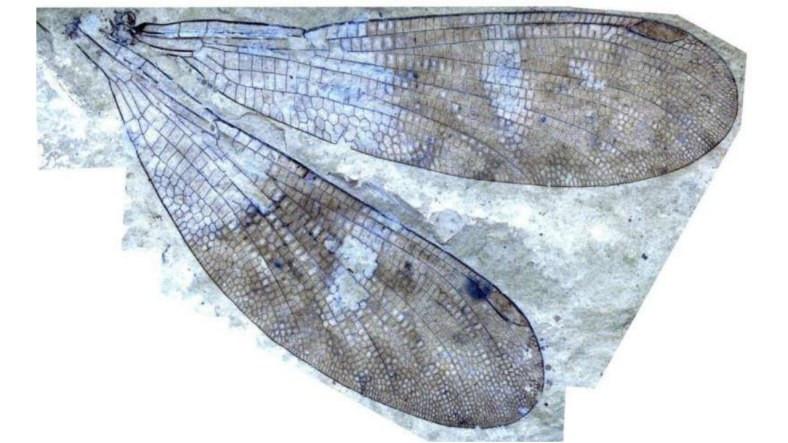 Araştırmacılar, 162 Yıllık Gizemi Çözerek Yeni Bir Böcek Türünü Keşfettiler