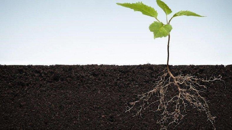 Araştırmacılar, Bitki Köklerinin Toprağa Nasıl Kazındığını Kaydettiler: Görüntüler Muazzam