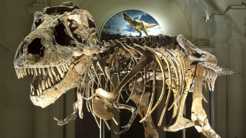 Dinozorların Neden Ya Çok Büyük ya da Çok Küçük Oldukları Keşfedildi