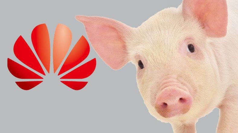 Huawei'den Şaşırtan Yeni Atılım: Domuz Çiftlikleri İçin Yapay Zeka Destekli Teknoloji