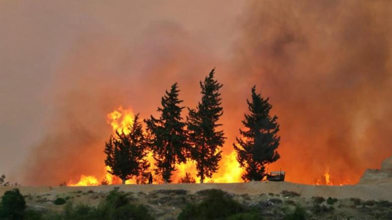 Küçük Sıcaklık Artışlarının Bile Orman Yangınlarını Korkunç Derecede Arttırdığı Keşfedildi