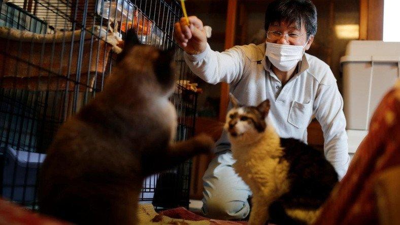 Nükleer Felaket Sonrası Kedileri Koruyan Adamla Tanışın: Sakae Kato