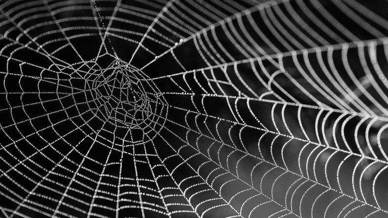 Bilim İnsanları, Örümcek Ağlarındaki Titreşimleri 'Müziğe' Dönüştürdü [Video]