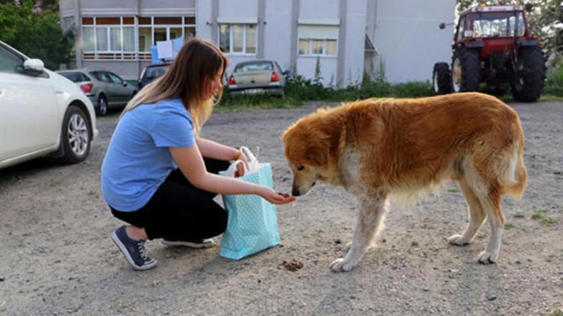 Tam Kapanma Boyunca Hayvanları Beslemek İçin Evden Çıkmak Serbest: Ancak Kanıtlamak Gerek