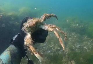 Deniz Tabanını Kar Gibi Kaplayan Müsilaj, Canlıları Bir Bir Öldürüyor [Video]
