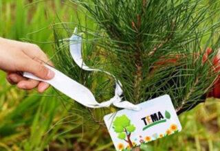 TEMA Vakfı, Orman Yangınları İçin Toplanan Bağışların OGM'ye Aktarılacağını Açıkladı