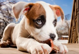 Köpekler Neden Kameralardan Nefret Eder?