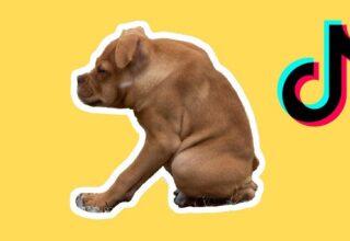Kurbağa Köpek Peşimi Bırak: Kısa Omurga Sendromuna Sahip Olan Pitbull Ivy, İnternetin Yeni Yıldızı Oldu