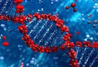 Türklerin Genetik Olarak En Çok Hangi Topluma Benzediği Açıklandı